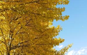 【新都桥图片】进入冬季回忆那片金黄的秋色——新都桥