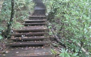 【临安图片】原始森林——临安西天目