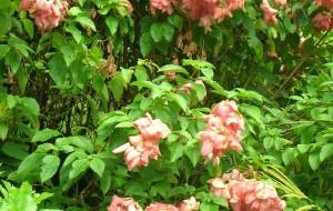 【万宁图片】热带植物