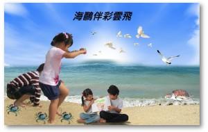 【澎湖图片】海鷗伴彩雲飛