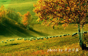 【塞罕坝图片】坝上的秋天很捉弄人