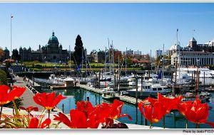 """【维多利亚图片】""""花之都""""~维多利亚--加拿大之旅(5)"""