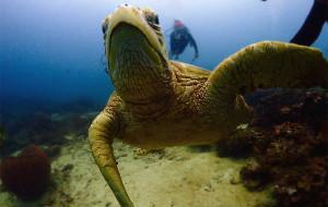 【诗巴丹图片】2016-2017双旦跨年宿平台诗巴丹潜水马达京度假
