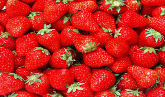 【草莓采摘】沈阳杨城寨草莓采摘一日游含生态蔬菜园