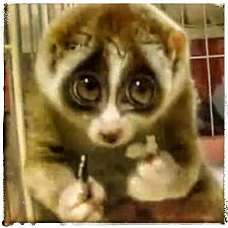 日常最多见的小动物就是壁虎了,也是民间手工艺创作的高频主题.