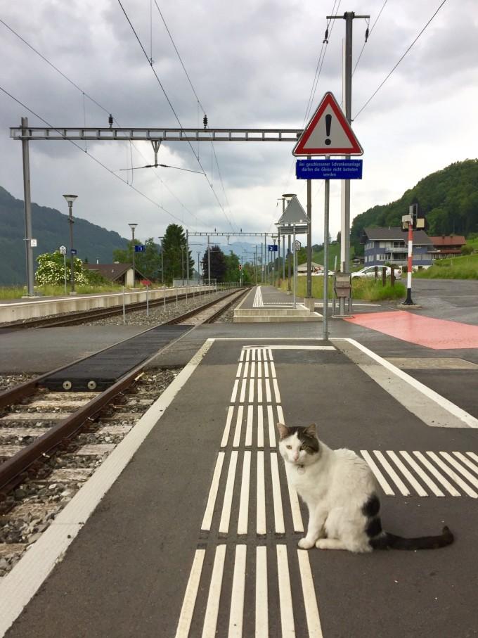 里昂火车站乘坐火车直接到达卢塞恩,火车基本是2小时左右一班,建议提前用SBB查一下,中途在BASEL换乘。买票大厅可以问一下,国外买票和国内不一样不是自己排队买票,售票大厅前有咨询人员,像银行一样他会为你取号等候购买。 注意事项:如果你在瑞士玩的天数3天以上,或者游玩地方多,建议购买swiss pass通票。 瑞士通票介绍: (1)瑞士通票 持有者可与制定日期内免费乘搭全瑞士陆路、铁路和水路交通(不包括一些登山火车)。其中包括如黄金列车和冰川快车等观景火车,另加不少于75个城镇的市内交通。 有效期:连续使
