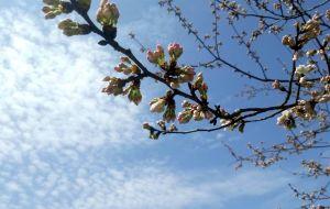 【平江图片】春天,你还欠谁一个约会?