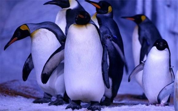"""您需要知道的""""武汉海昌极地海洋公园"""" 多层多馆组合式室内极地海洋主题公园 有海豹、海狮、海象、海牛、北极狼、白鲸、海豚、鲨鱼、海龟等 有地球两极的动物代表:""""北极之王""""北极熊,""""南极精灵""""帝企鹅 品尝独特的海洋风味,吹着阵阵海风,踏着浪花,尽享闲适的度假生活 武汉海昌极地海洋公园简介 海昌武汉极地海洋世界是海昌集团继大连老虎滩极地馆、青岛极地馆、天津极地海洋世界、成都极地海洋世界之后,为布局华中,投资建设的第五座涵盖极地与海洋概念的大"""