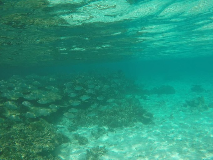 马尔代夫~罗宾逊岛七天五晚蜜月之旅