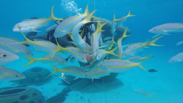 影片連接 https://youtu.be/XewL8-aYXhU 昨天一到巴哈馬 就報名了我一直超想玩的underwater bubble diving SUBmarine 中文不確定叫什麼(?) 水下泡泡潛艇? 我是之前就在TripAdvisor 查過然後又在hotel的旅遊諮詢櫃檯拿了資料 我選的這家: http://bit.ly/2j27f9h 通常旅遊勝地的飯店都會有個報名的櫃檯在大廳那邊 所以很方便有時沒有確定時程通常去了也可以報名 不過就是怕額滿之類的~ 之前去Hawaii 就超級想