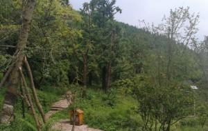 【盘县图片】乌蒙大草原,妥乐银杏村。夏天8月之旅