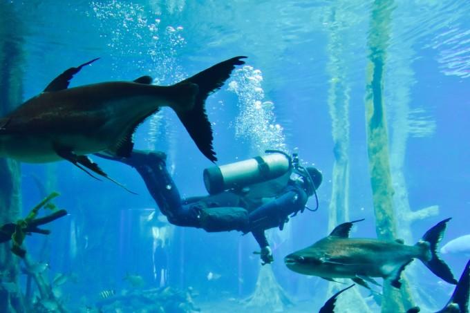 壁纸 动物 海底 海底世界 海洋馆 水族馆 鱼 鱼类 680_453