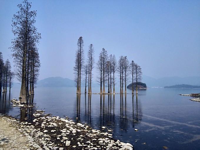 余姚四明湖水杉林.红杉林.水上森林