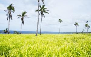 【汤加图片】南太平洋航海日志(12)去汤加?还真不如国内!