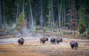【黄石国家公园图片】走~去黄石、大提顿国家公园【赴一场不远万里的约定】