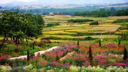 日照景点-花仙子风景区