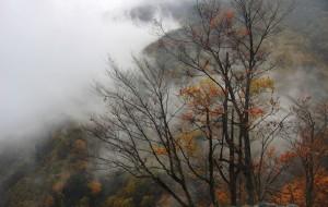【神农架图片】雨雾神农
