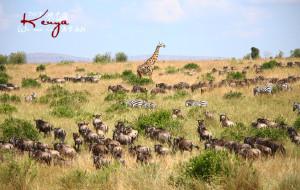 【肯尼亚图片】【不只是动物! 】肯尼亚Safari十天~内罗毕-马赛马拉-纳库鲁-奈瓦沙-安博塞利-多哈(2013.07.05-14)