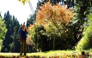 【嘉义图片】阿里山赏枫日记--台湾