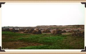 【鄱阳湖图片】20121021一个人的旅行-鄱阳莲湖