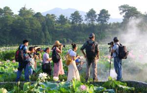 【抚州图片】青荷盖绿水,芙蓉披红鲜。