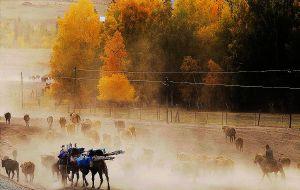 【唐布拉草原图片】马背上的候鸟---哈萨克族秋季转场纪实