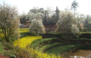 【永安图片】2012万里长江第一县之四川南溪梨花节印象