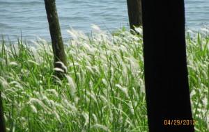 【硇洲岛图片】阳光明媚,一起去湛江—湖光岩、东海岛、硇洲岛