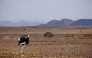 【纳米比亚图片】不一样的人生从这里开始——纳米比亚(上)