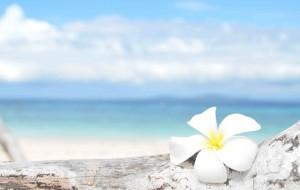 【杜马盖地图片】2014春节杜马盖地+薄荷岛 和你一起牵手唱歌看大海!