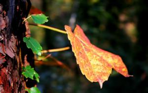 【蒙阴图片】登望海楼,赏蒙山红叶。