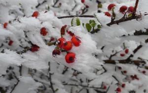 【天台图片】雪非雪 雾非雾 华顶雾淞