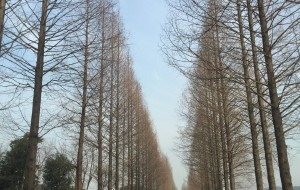 【安吉图片】Das ist Winter,aber warm als Frühling