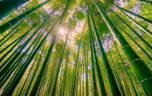 【宜宾图片】那一片绿的竹海,你可听到沙沙的竹语