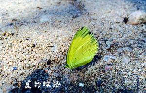 【浙西大峡谷图片】花开半夏——行浙西
