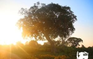 【努沃勒埃利耶图片】初遇兰卡,南来的风有印度洋的芬芳【已完结】