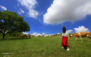 """【锡林郭勒图片】玩一""""夏"""",先去草原撒点儿野,1+1+1再出发……"""