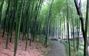【宜兴图片】宜兴--竹海、善卷洞、大觉寺、云湖