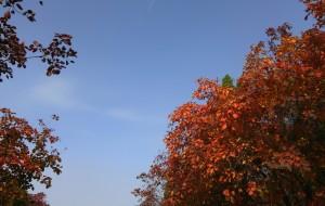 【济南图片】济南的秋天:层林尽染水溪园~~    情人缠绵绚秋湖~~    红叶谷浮想联翩~~