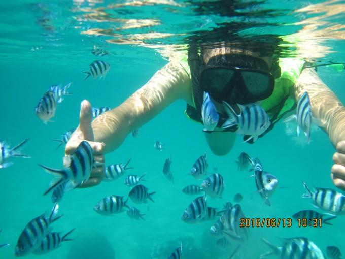 壁纸 海底 海底世界 海洋馆 水族馆 桌面 680_510
