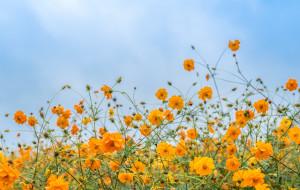 【宿迁图片】初秋的宿迁,用鲜花和美食留住你