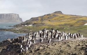 【南极半岛图片】人间最后一片净土- 南极