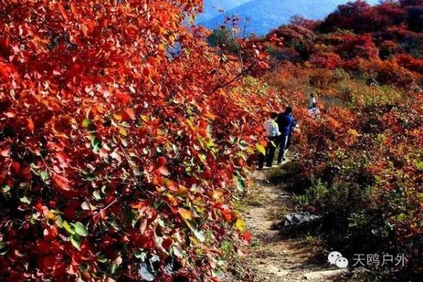 全国红叶风景排名为啥没有河南?小编推荐十个地方pk香山