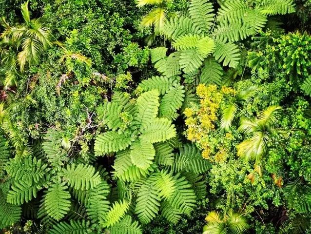 热带雨林不可错过的植物奇景!