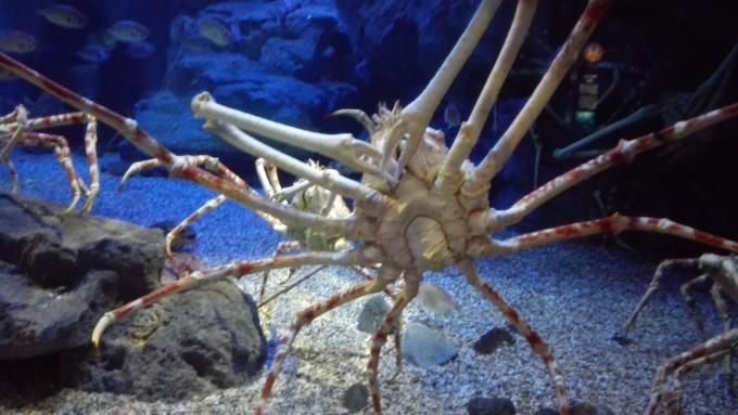 壁纸 动物 海底 海底世界 海洋馆 甲壳类 水族馆 680_383