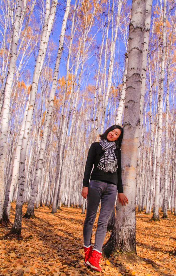 白桦林景区