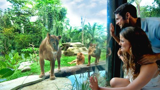 巴厘野生动物园龙套票 龙套装包含 : 游园车 / 淡水水族馆 / 可爱动物表演 / 大象表演 / 阿贡秀银卡座位 / 水上乐园 / 儿童游乐场 位于巴厘岛乌布40分钟车程,吉安雅Gianyar行政区滨海快速公路上有片奇妙的公园,这片面积不小的公园里,散养着各种野生动物,有国外引进的稀有物种,也有很多没见识过的巴厘岛本土动物,这就是Bali Safari & Marine Park巴厘岛野生动物园。  巴厘野生动物园龙套票升级狮子餐厅 拥有浓郁巴厘岛风情的野生动物园第一眼就吸引了众人目光,偌大一个公