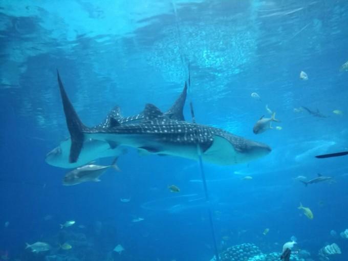 国庆亲子游:珠海长隆海洋王国 长隆大马戏 横琴湾水世界