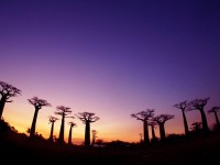 马达加斯加