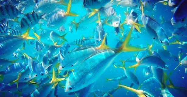 壁纸 海底 海底世界 海洋馆 水族馆 桌面 615_319